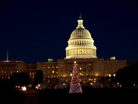Capitol and Tree 2009.jpg